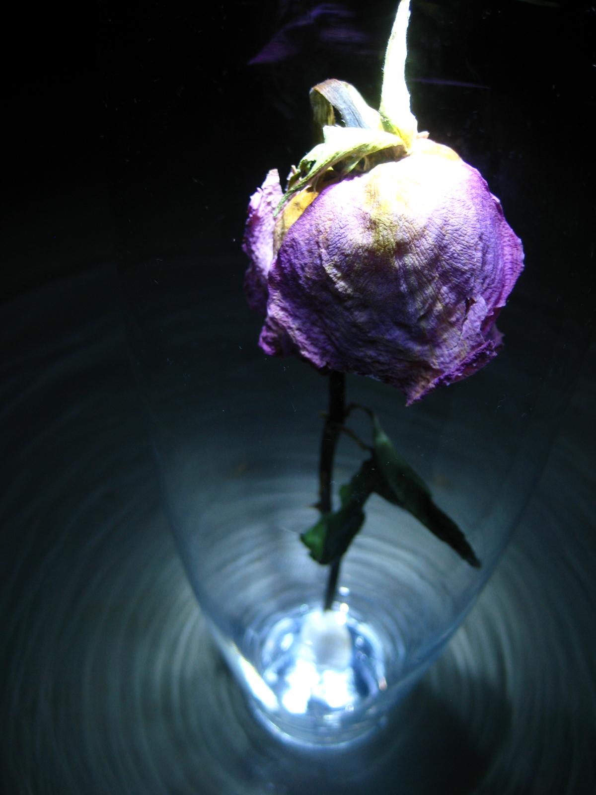 rose under glass the shattered lance. Black Bedroom Furniture Sets. Home Design Ideas