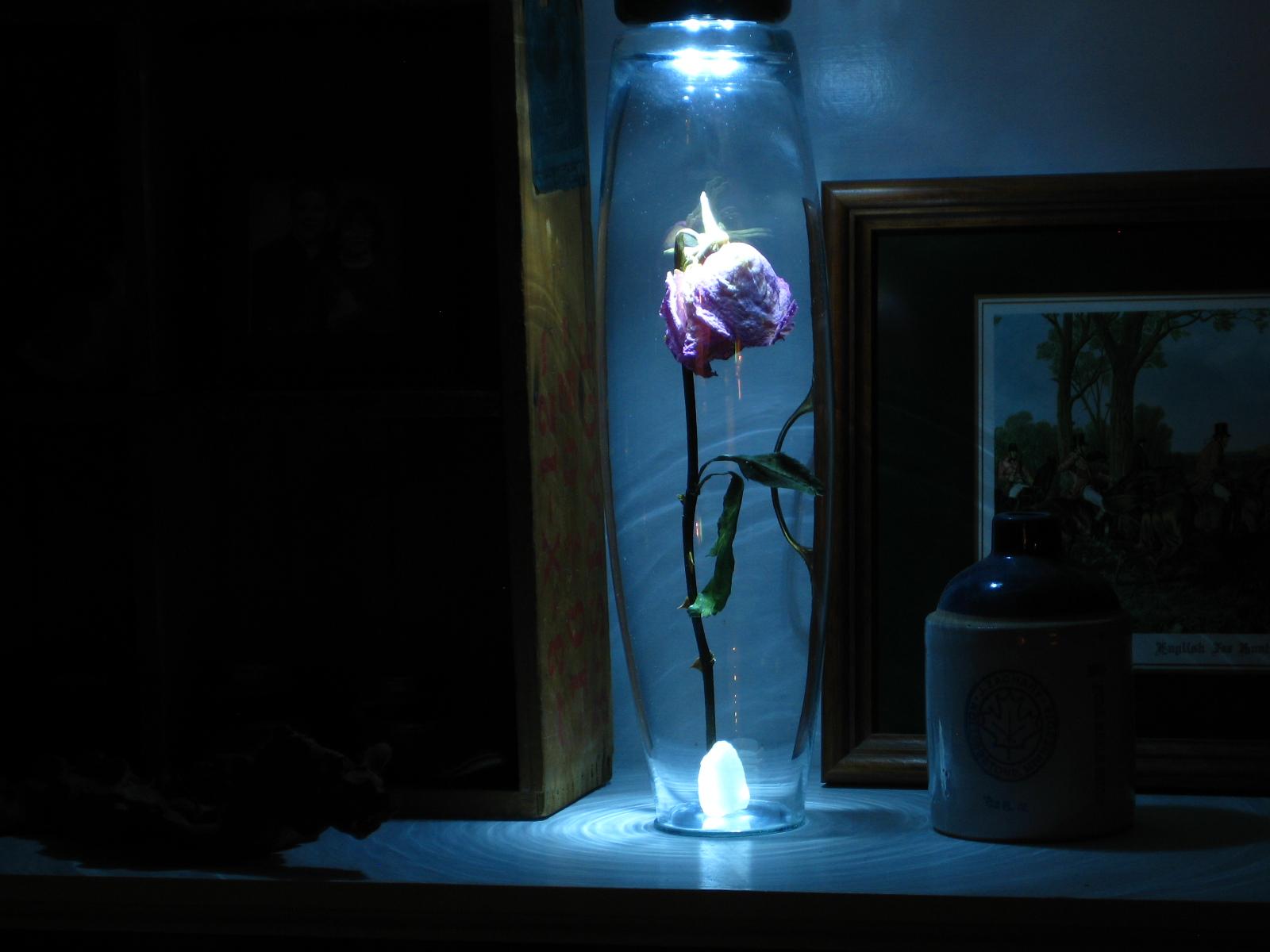 Rose Under Glass The Shattered Lance